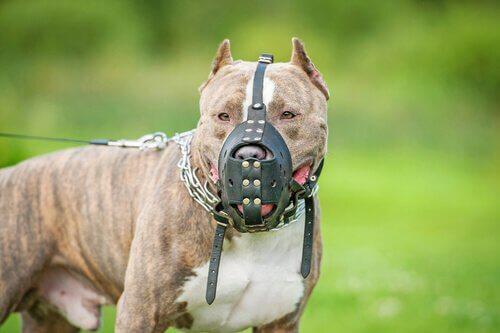 Você deveria fazer um seguro para o seu cão?
