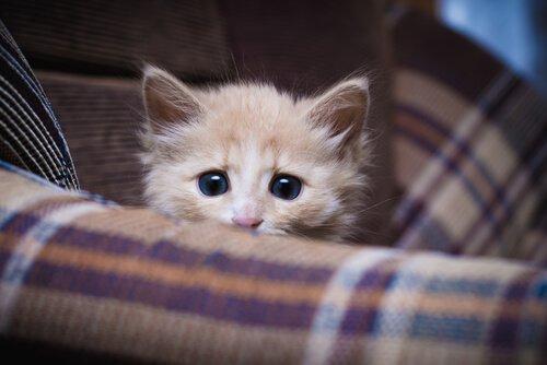 É necessário socializar gatos?