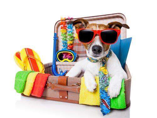 preparar o seu cão para o verão