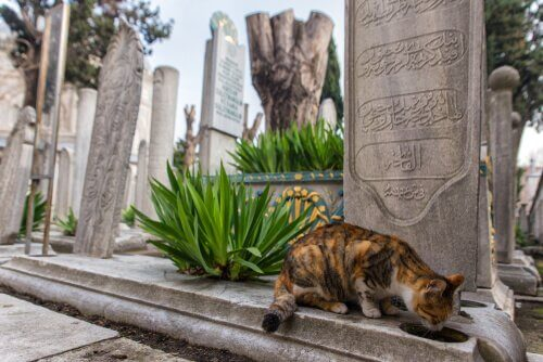 Conheça Istambul: a cidade dos gatos