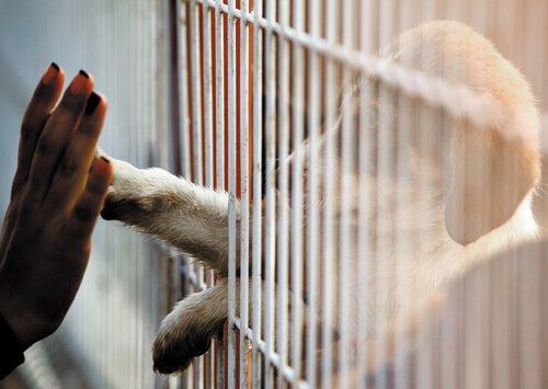 Se não dá para adotar, dá para ajudar os animais de outra forma!