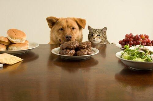Os gatos e os cães podem comer o mesmo?