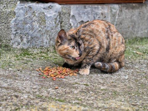 ganhar a confiança de um gato de rua