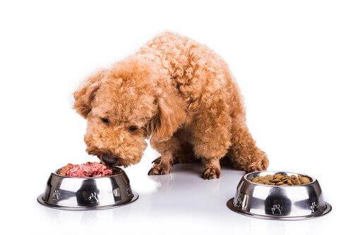 Alimentar nosso animal de estimação mais naturalmente é possível!