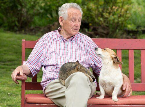 Animais de estimação nos ajudam a viver mais