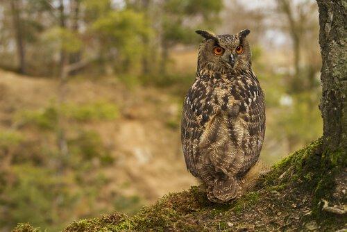 animais que vivem em árvores: coruja