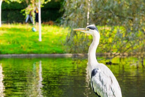 animais que vivem em rios
