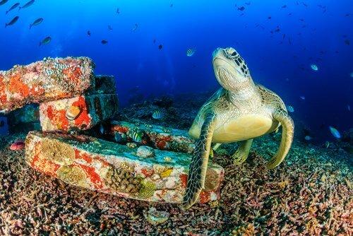 A tartaruga como um símbolo cultural