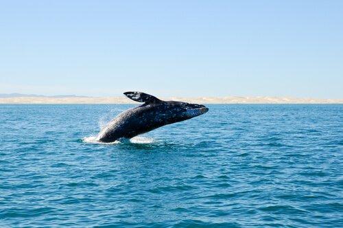 Baleias extintas são descobertas na costa espanhola