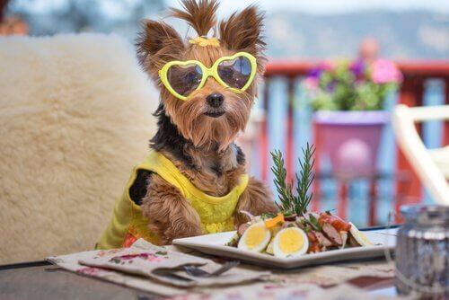 saladas para cães
