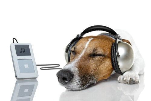 Cães e música