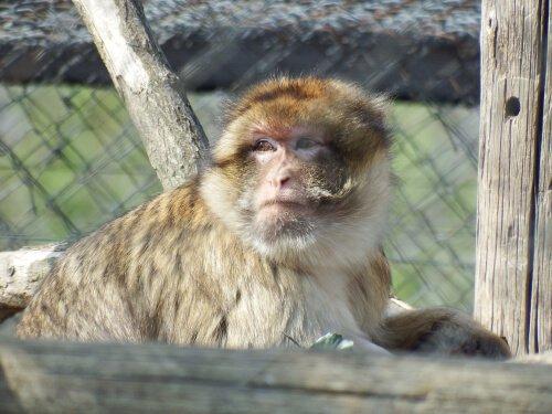 Macaco em um centro de resgate animal