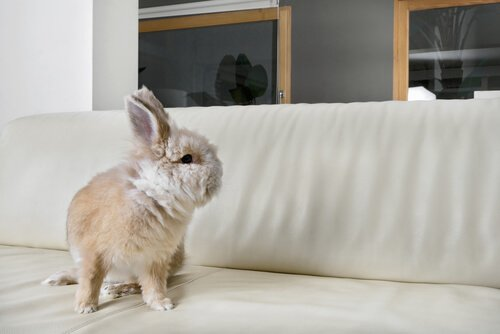 Estresse em coelhos: saiba como combatê-lo de forma eficaz