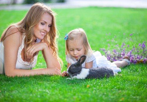 Dicas para brincar com seu coelho