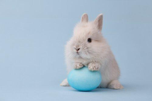coelho toy com ovo azul