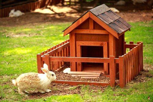coelho como pet