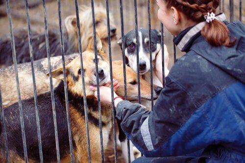 Ajudar animais em abrigos