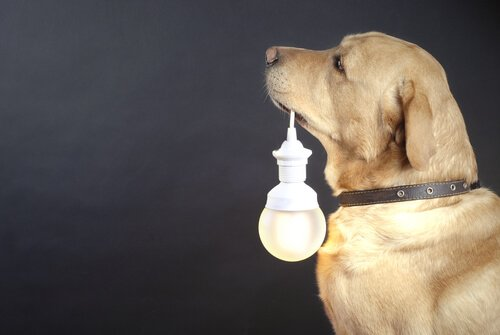Coleiras luminosas para cães de rua: conheça este projeto