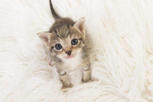 Como cuidar de um gato bebê