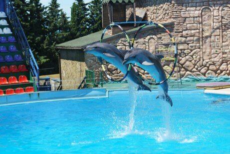 Delfinário: liberdade ou prisão para os golfinhos?