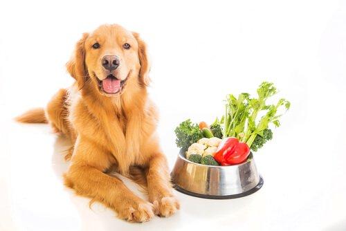 cães e legumes