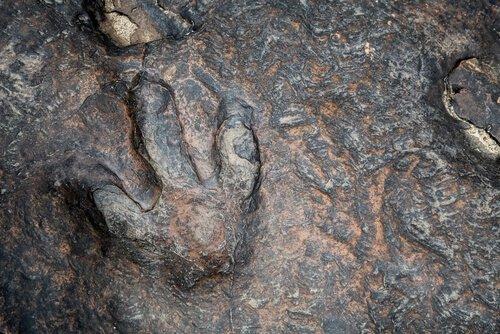 Dinosaur Valley State Park: pegada de dinossauro
