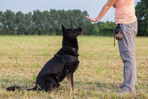 Cachorro sendo treinado