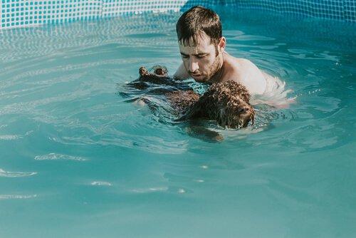 Dono com cachorro na piscina