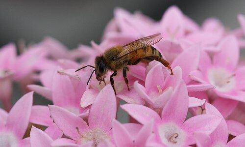 A importância das abelhas no ecossistema