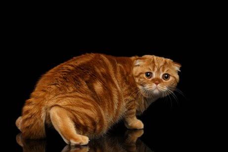 Expressões dos gatos
