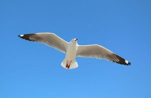 Por que as gaivotas são aves marinhas