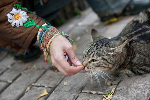 Como ganhar a confiança de um gato de rua