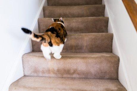 Por que meu gato corre feito louco pela casa?