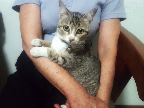 Gato no colo