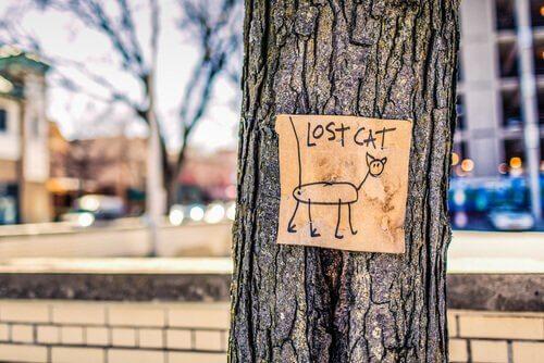 Placa com desenho de gato perdido