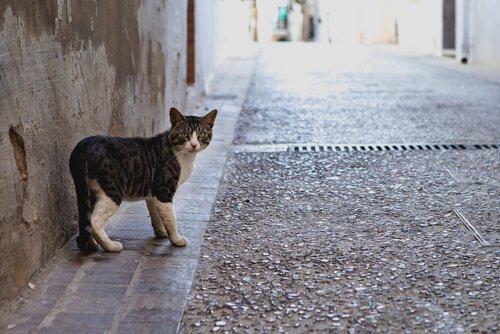 Por que os gatos saem e voltam para casa?