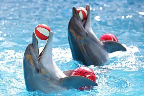 Golfinhos treinados
