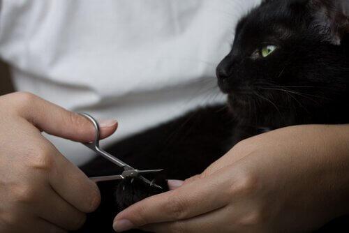 Como cortar as unhas de um gato