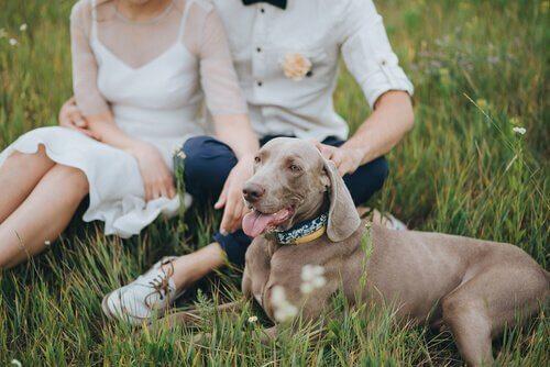 Animais de estimação em casamento