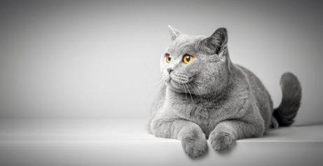 Linguagem corporal dos gatos