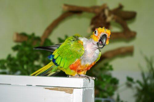 depressão em papagaios