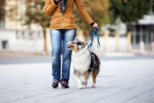 Mulher passeando com seu cachorro