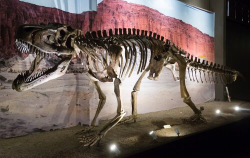 Museu paleontológico Egidio Feruglio: fóssil de dinossauro