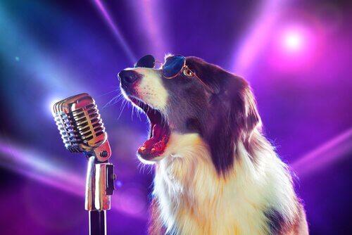 8 músicas que você não conhecia sobre cães