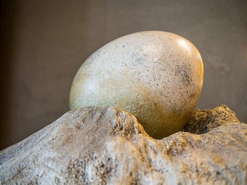 Parque Jurássicoda Índia: ovo de dinossauro