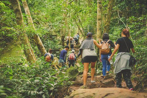ecoturismo: turistas visitam um parque nacional