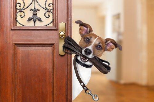 Cachorro à porta com coleira na boca