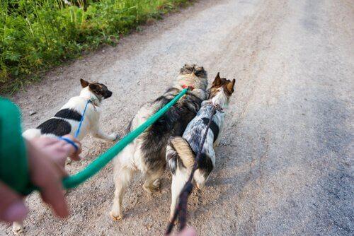 Passear com vários cães