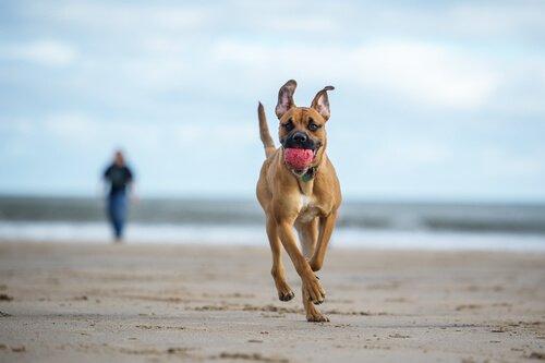 Praias pet friendly: conheça as melhores