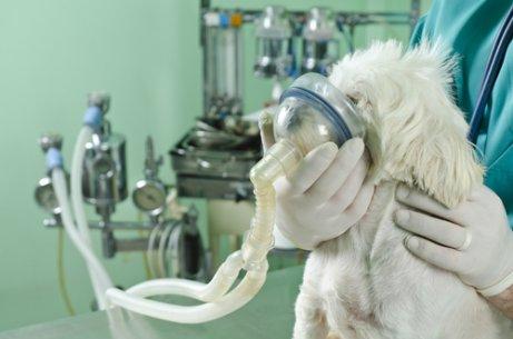Problemas respiratórios em cães: dicas para resolvê-los